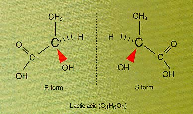 The right- and left-hand versions of the lactic acid molecule.